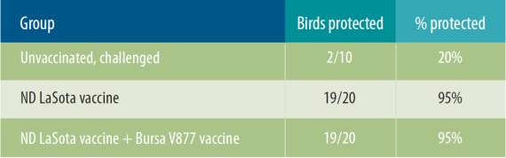 Table 2. Protection of chickens vaccinated with an ND LaSota vaccine alone or in combination with the IBD V877 vaccine