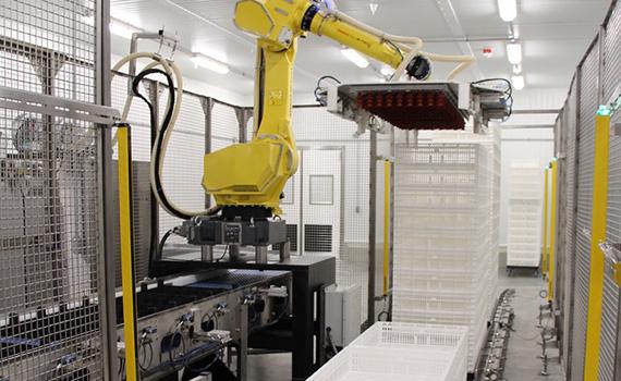New US turkey hatchery shows industry's focus on ...